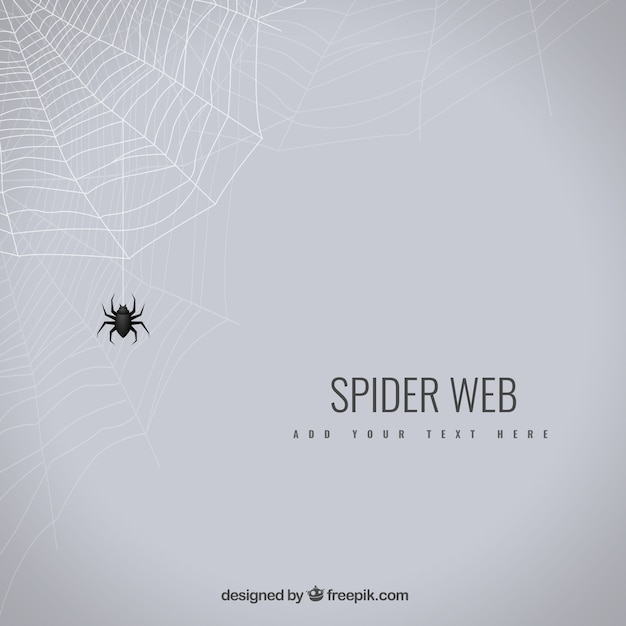 Spider web background Free Vector