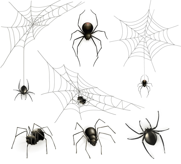 Spiders and spider web set Premium Vector