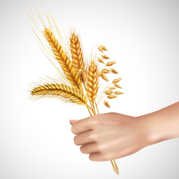 Spikelets in hand realistic composition Free Vector