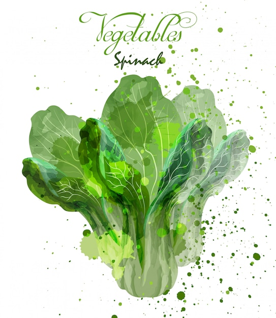 Spinach salad leaves watercolor Premium Vector
