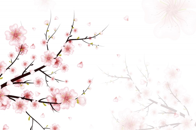 Spring background.  illustration of spring bloom branch with pink flowers, buds, petals falling. realistic   on white background. blooming cherry tree twig. Premium Vector