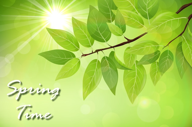 Spring background with fresh green leaves Premium Vector