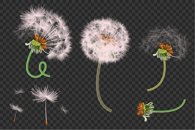 822d031abb5bc Spring background with white dandelions Vector | Premium Download