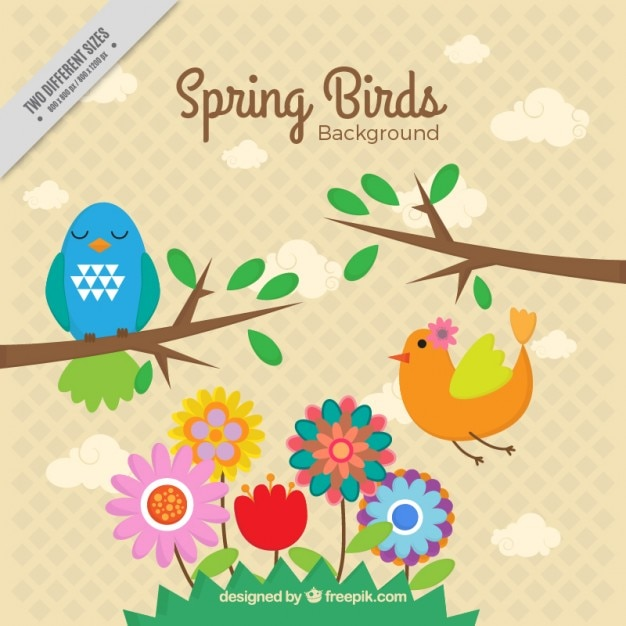Spring birds background
