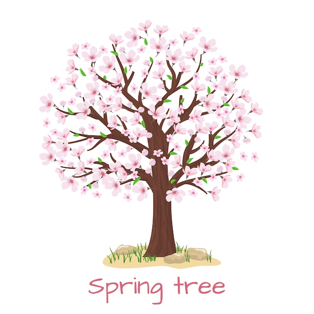 Spring blossom cherry tree. petal and nature, branch plant, vector illustration Free Vector