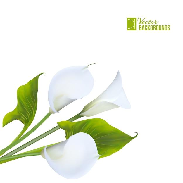 分離された春の花束カラリリー 無料ベクター