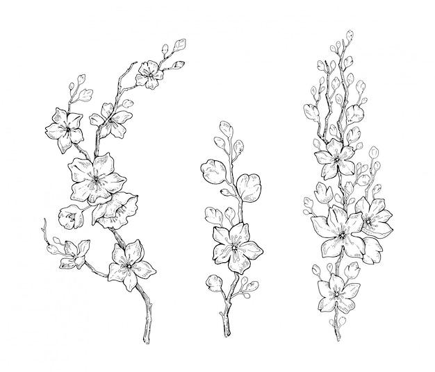 Spring cherry flower blossom, botanical black line sketch set. Premium Vector