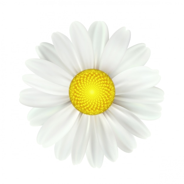 Spring daisy flowers isolated Premium Vector
