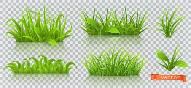 Spring, green grass. Premium Vector