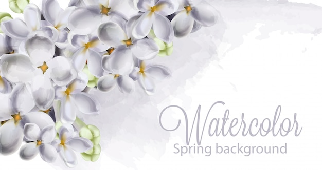 Spring hydrangea flowers watercolor Premium Vector