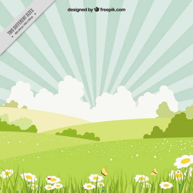 Spring landscape with daisies Premium Vector