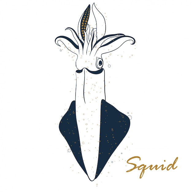 Squid hand drawn isolated on white background. Premium Vector