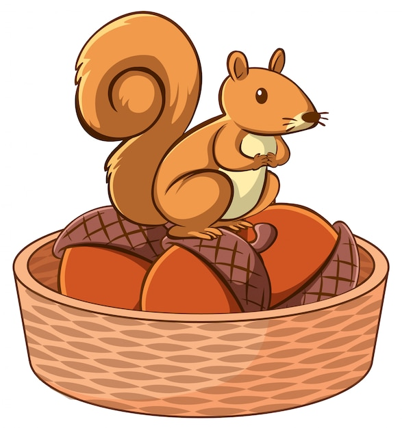 Squirrel in basket Free Vector