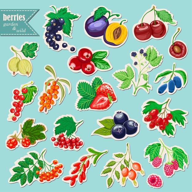 果実とstikersのベクトルコレクション Premiumベクター