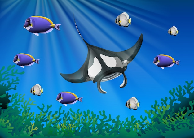 Stingray and many fish under the ocean Free Vector