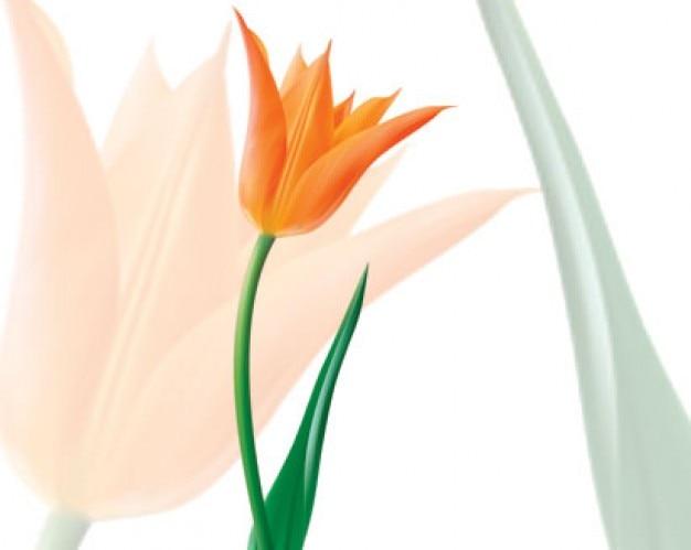 Stock vector of Tulip orange Free Vector