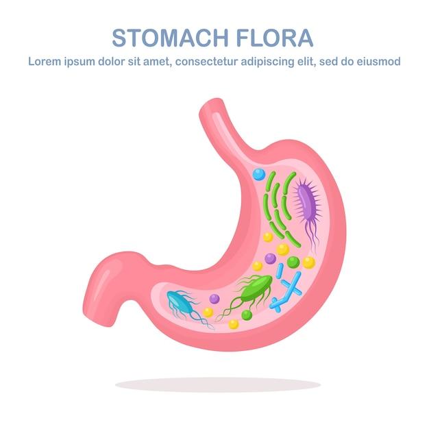 胃フローラ。消化器系、細菌、ウイルス、微生物、白い背景の上のプロバイオティクスと管。人間の内臓。医療、生物学。 Premiumベクター