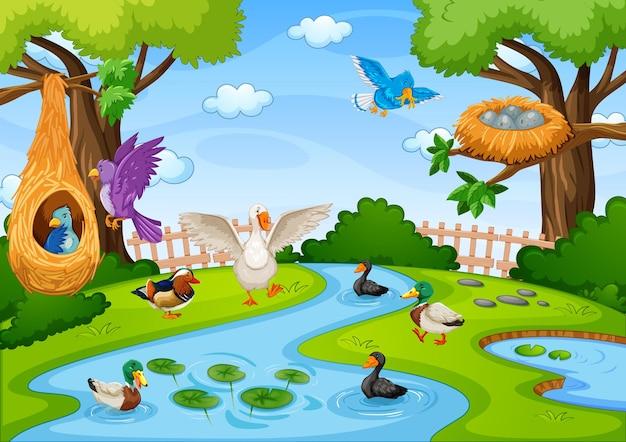 Flusso nella scena della foresta con molti uccelli Vettore gratuito