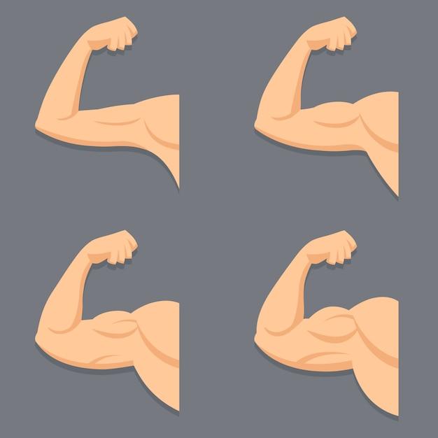 Сильная рука с сокращенным бицепсом. иллюстрация мышц в мультяшном стиле. Premium векторы