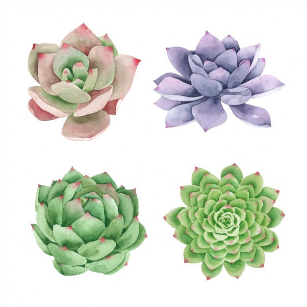 how to display succulents 30 cute examples.htm succulents cactus hand pained in watercolor collection premium  succulents cactus hand pained in