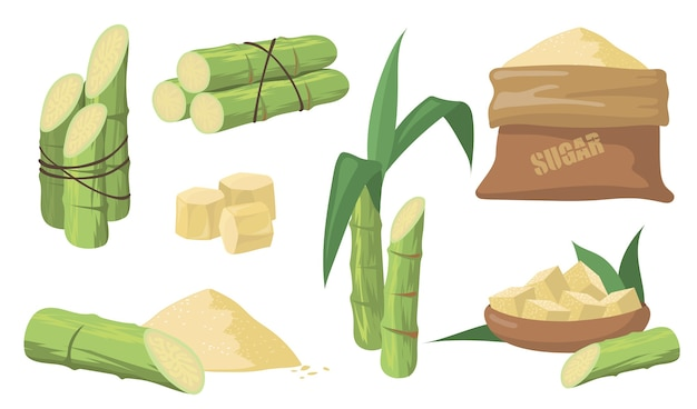 Sugarcane and sugar set. pack of green stems, plants with leaves, sack with brown sugar isolated on white background. illustrations collection for agriculture, rum, liquor production concept. Free Vector