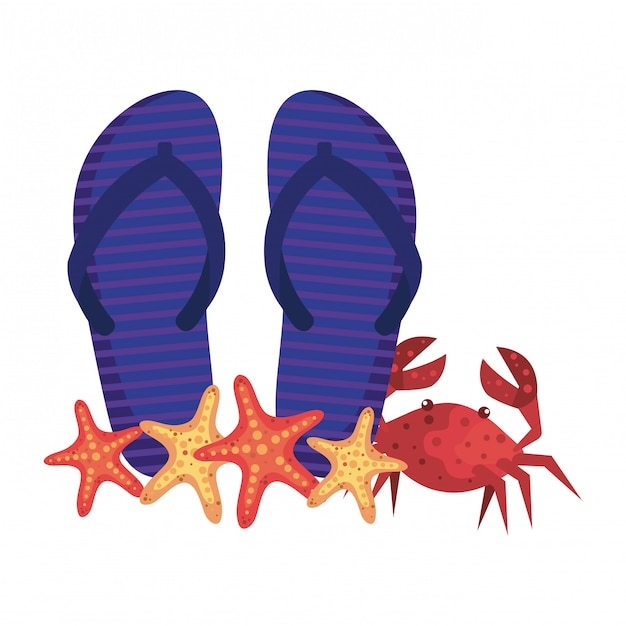 Summer flip flops and crab with starfish Premium Vector