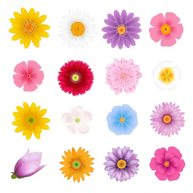 Набор летних цветов Premium векторы