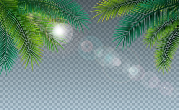 Summer illustration with tropical palm leaves on transparent Free Vector