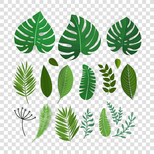 Summer season exotic leaves vector collection isolated on transparent Premium Vector