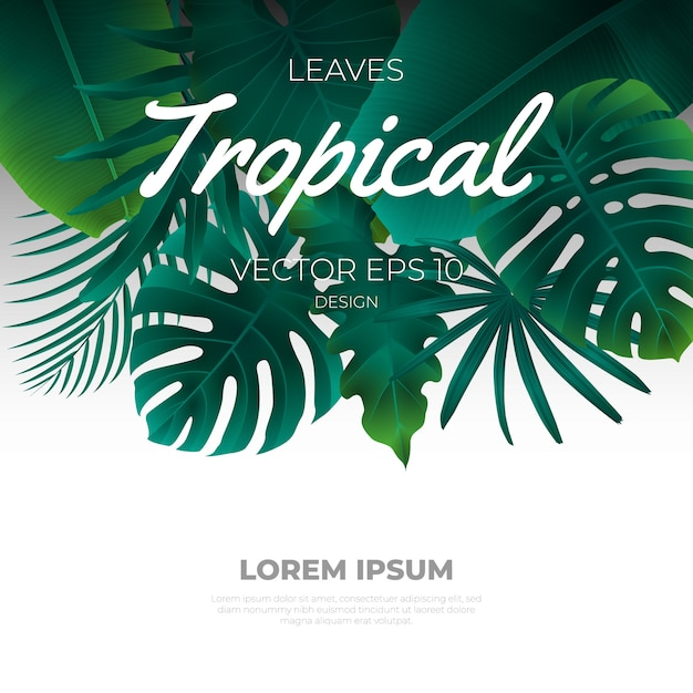 Summer tropical leaves template background. Premium Vector