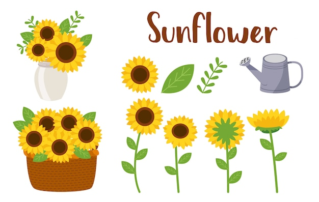Sun flower set Premium Vector
