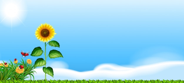Sunflower in the garden Free Vector