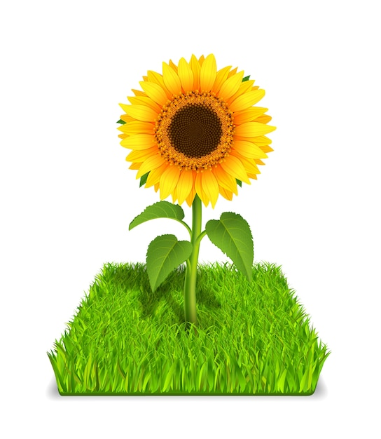 Sunflower in the green grass Free Vector
