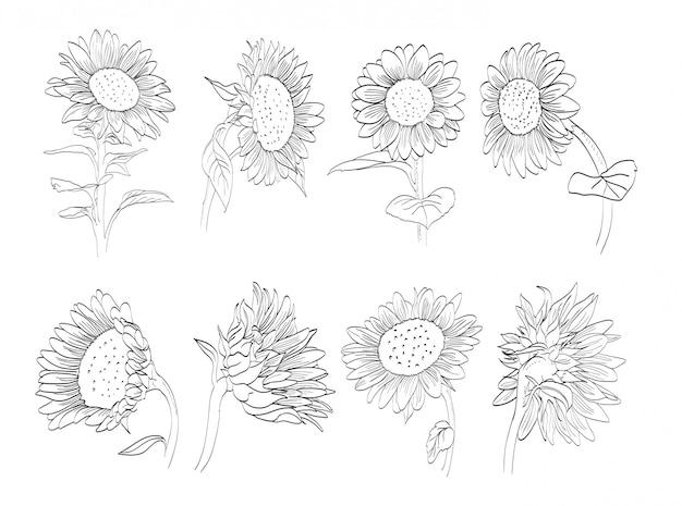 Sunflower hand drawn collection Premium Vector