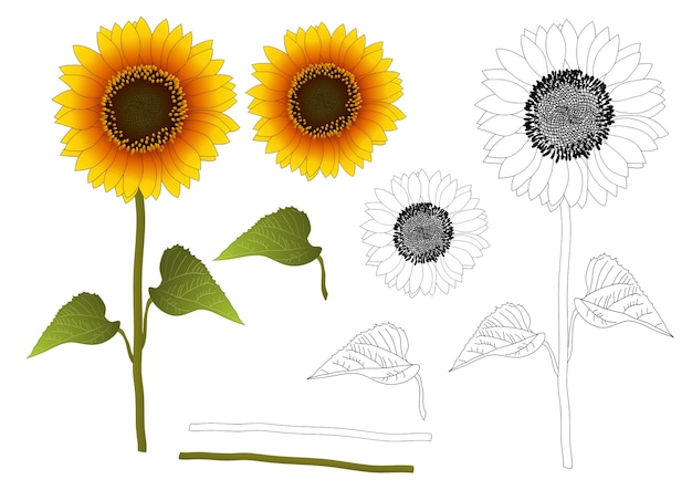 Premium Vector Sunflower Outline Sunflower outline images, stock photos & vectors | shutterstock, free portable network graphics (png) archive. https www freepik com profile preagreement getstarted 2425006