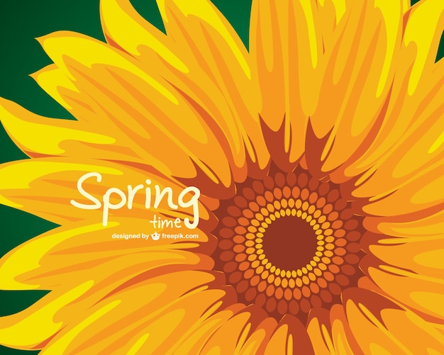 Sunflower spring background