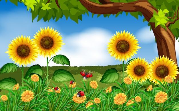 Sunflowers and ladybugs in garden Premium Vector