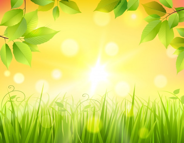 Sunrise in forest Free Vector