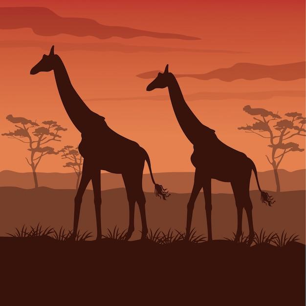 立っているシルエットのキリンと日没のアフリカの風景 Premiumベクター