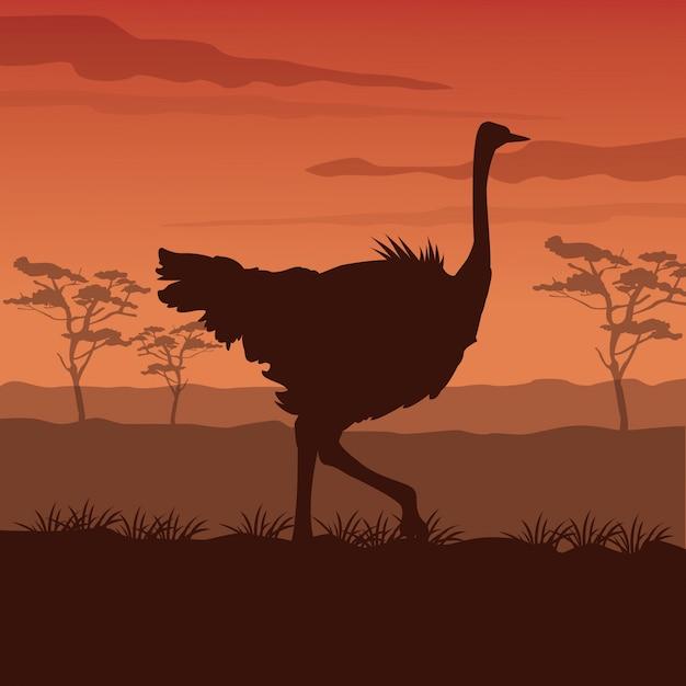 シルエットダチョウの立っている日没のアフリカの風景 Premiumベクター