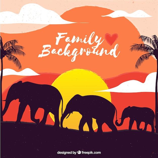 Sunset elephant family background