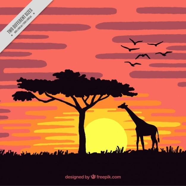 Sunset in the savannah with a giraffe