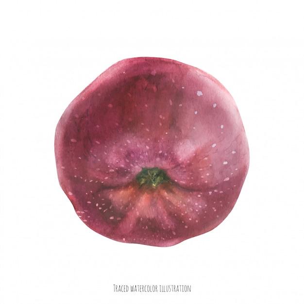 Sweet big red apple Premium Vector