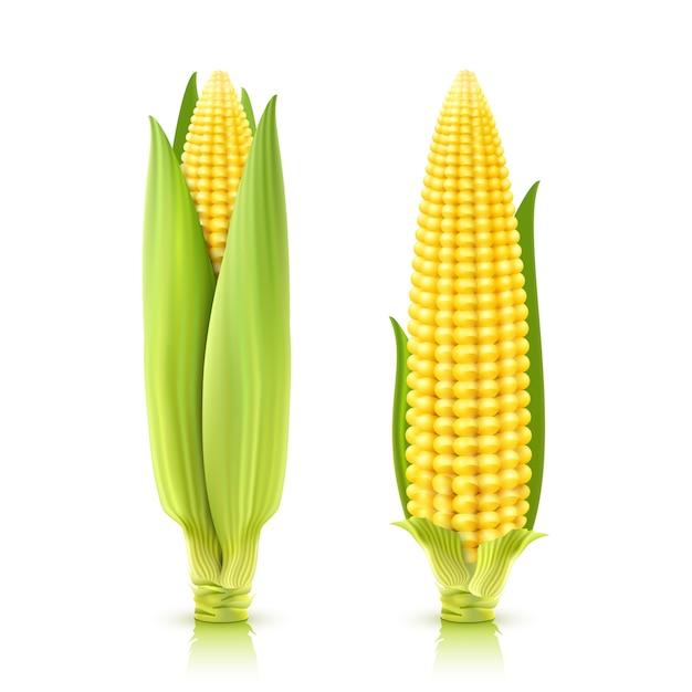 Sweet corn set Free Vector