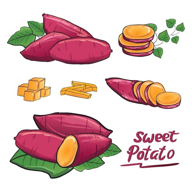 Sweet potato illustration drawing vector collection set Premium Vector