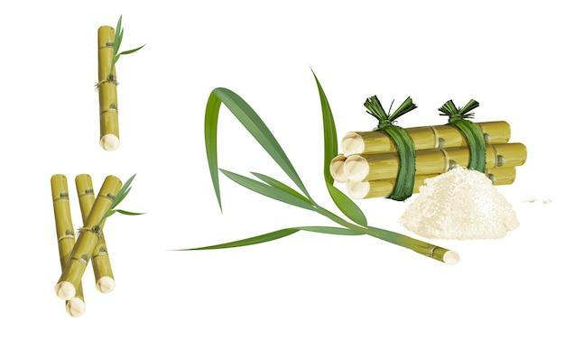 ケインまたはサトウキビ甘みとsweetflavourは、白い背景に葉。 Premiumベクター