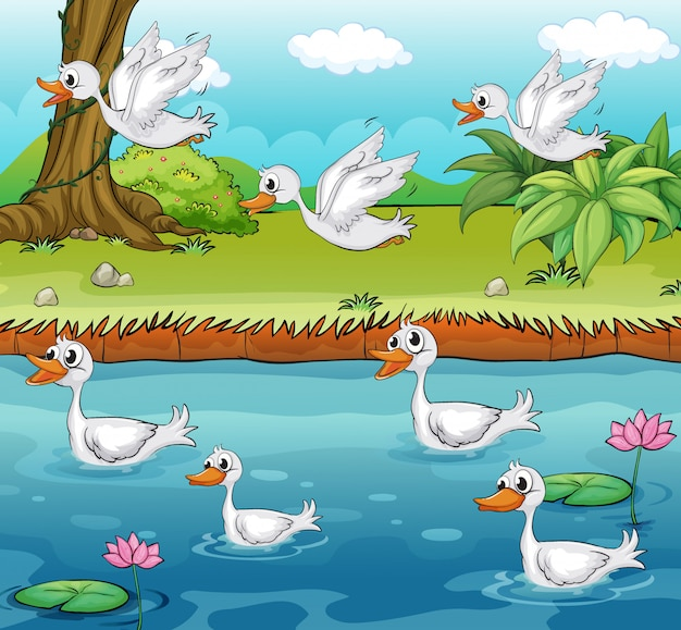 Swimming and flying ducks Free Vector