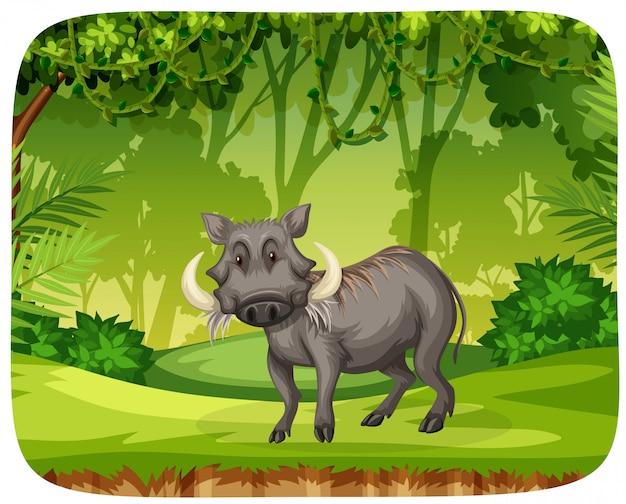 Swine in the jungle Free Vector