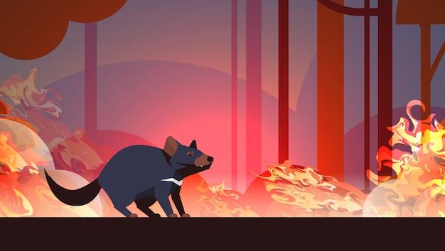 Тасманский дьявол, спасаясь от лесных пожаров в австралии животное умирает в лесном пожаре лесной пожар горящие деревья концепция стихийного бедствия интенсивное оранжевое пламя горизонтальное Premium векторы