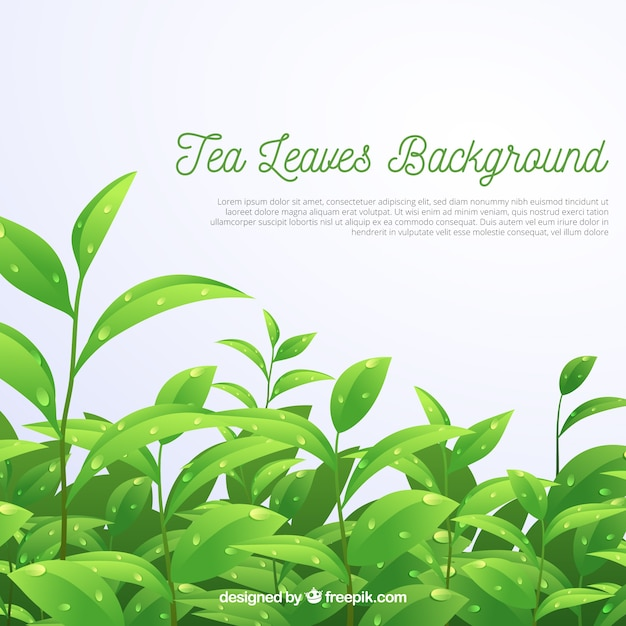 Tea leaves background in realistic style Free Vector